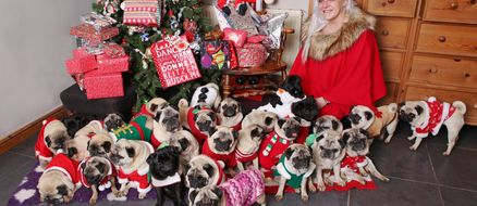 UK Womans Spends $30,000 on Her 30 Pugs Per Year Is Spoiling Them for Their Christmas