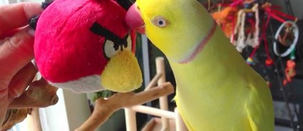When your boss is pissed… and it's a bird.