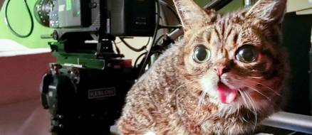 Lil Bub the 'mysterious alien woman' Raises over $300,000 for ASPCA