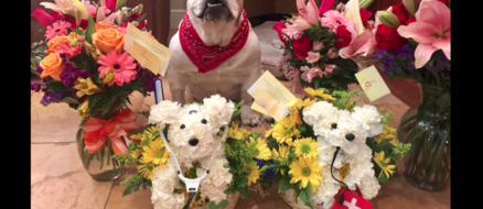 Looking for Valentine's Day ideas? How about Dog Flowers.