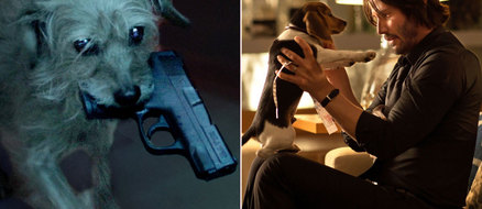Dog Wick: What if Keanu Reeves and his Puppy in John Wick Switched Roles?