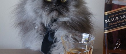 Colonel Meow the Whisky Drinking Cat Still Makes YouTube Royalties