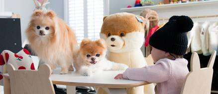 Boo the World's Cutest Dog Makes $20,000 a Week ​