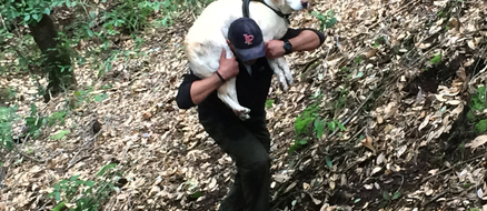 Sage The Blind Dog's Amazing Rescue After a Week Lost in the Woods
