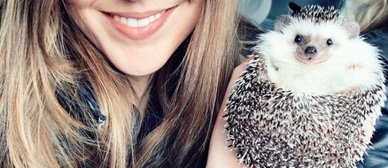 "The ""world's cutest adventurer"" Mr. Pokee is an African Pygmy Hedgehog with Wanderlust"