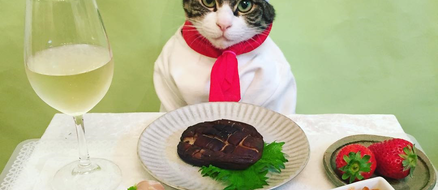 Maro the cosplaying cat chef eats and dresses better than you