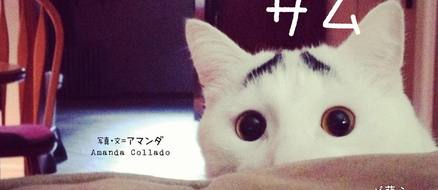 Sam, the Kitty with Cara Delevingne Quality Eye Brows, 250K Followers, and a Book Deal