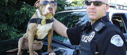 Top 5 Pitbull Rescues from the K9 Unit