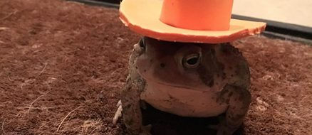 Man makes cute hats for toad that visits his porch