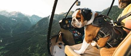 Mr Bentley the helicopter loving adventure bulldog