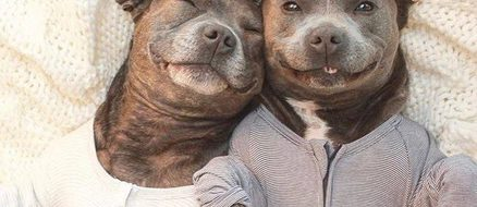 Pitbull brothers Darren & Phillip fight breed specific legislation in pyjamas