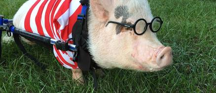 Chris P. Bacon doesn't let his wheelchair slow him down