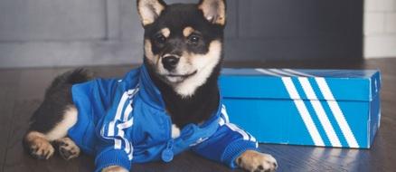 Meet @dachihype, the sneakerhead shiba