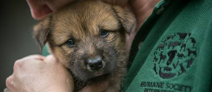 Dog meat farmer has a heart, turns to Humane Society for help saving 148 dogs
