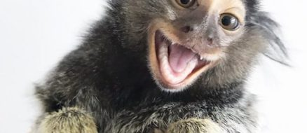 Finger monkeys Diddy & Yeti Kong were orphans, now best friends