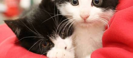 Adorable kitty pouch helps feral cats get adopted