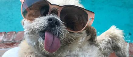 Top 5 Tongue Waggin' Instagram Stars