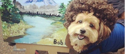 Top Ten Pet Halloween Costumes
