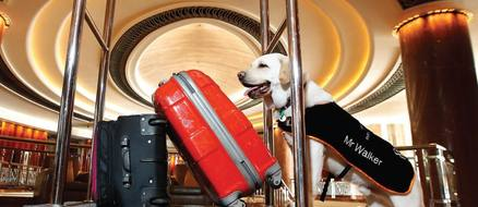 Good boy Labrador failed guide dog school, hired as hotel concierge instead