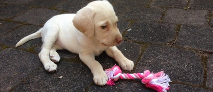 Stolen puppy returned to family by thieves with a conscience