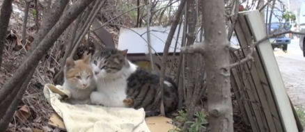 Feral cat protects his disabled girlfriend