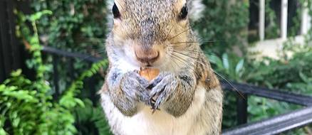 Bella the Squirrel is Half Wild and Half Family Pet