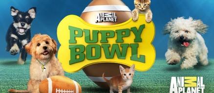 Puppy Bowl is back! Meet Team Fluff and Team Ruff