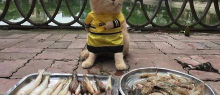 A fishmonger cat named dog takes over pet fashion