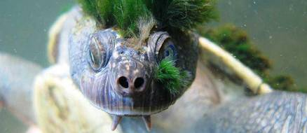 Green Haired Turtle Breathes Through His Junk & Is More Punk Than You