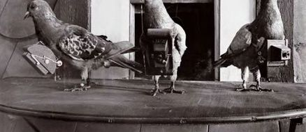 Worlds First Drone Was Actually A Pigeon