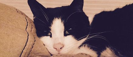 Rescue Cat Saves Family From Carbon Monoxide Poisoning
