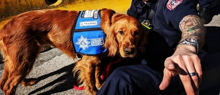 Lola the golden retriever joins fire department to help with mental health