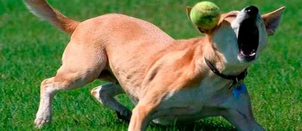Animal Fails You've Gotta See