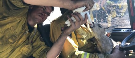 Firefighters Rescue Two Baby Fawns From California Wildfire