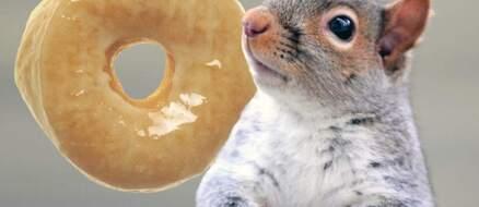 Felony Squirrel On The Run - Last Spotted In Alaska