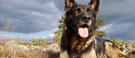 World Cup 2018: England soccer fans harass police dog for being German