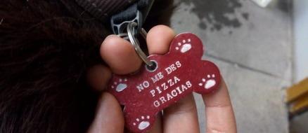 Swindler Dog Runs Pizza Scam Pretending to be Homeless