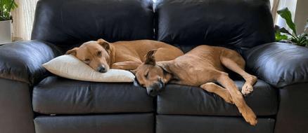 Sad Dog Has the Most Amazing Transformation