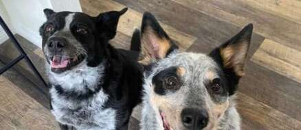 Two Smart Dogs Reinvent The Game of Fetch