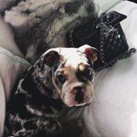 Tyga's pet Rolly