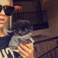 Sofia Richie's pet Flynn Richie