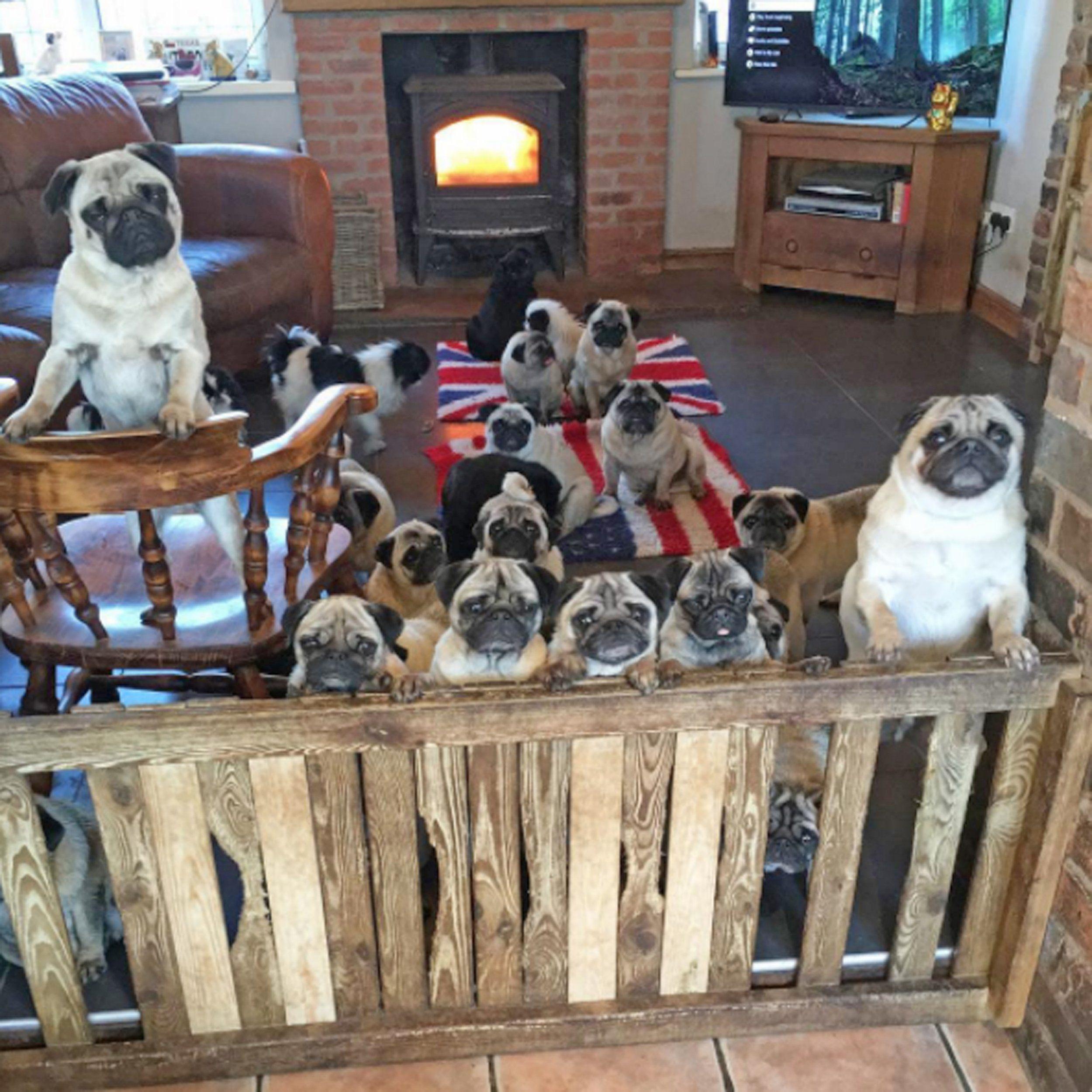 A Pugs Christmas