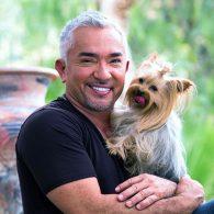 Cesar Millan's pet Alfie