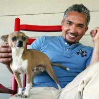 Cesar Millan's pet Coco