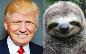Donald Trump the Sloth