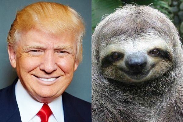 Donald Trump the Sloth