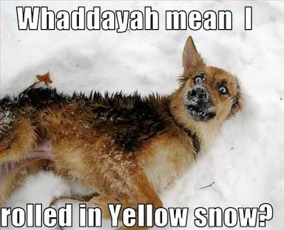 Dog Yellow Snow
