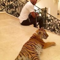 Floyd Mayweather Jr.'s pet Rare Exotic Tiger from India