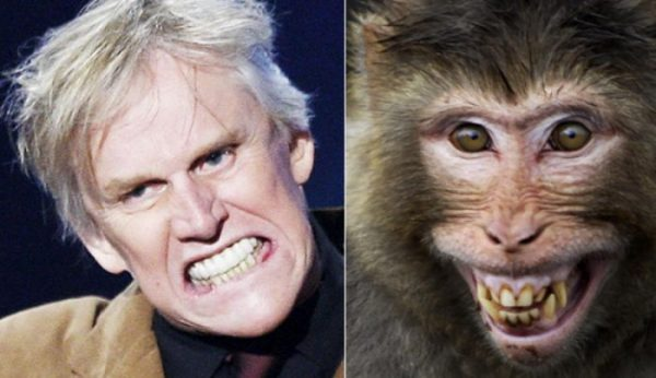 Gary Busey the Chimp