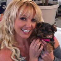 Britney Spears' pet Hannah Spears